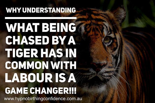 natalies-tiger